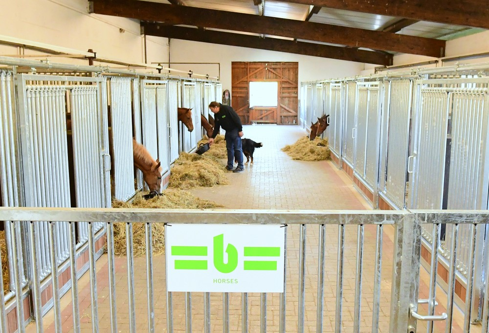 The first foals moving into their new home...